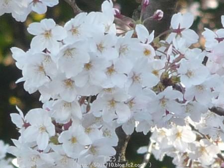 150328-伊勢山皇大神宮 (7)