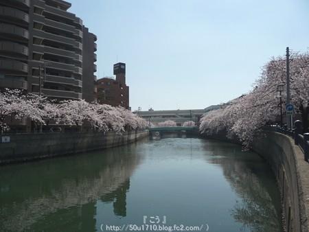 150402-桜 大岡川 (2)