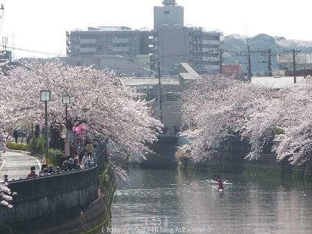 150402-桜 大岡川 (18)