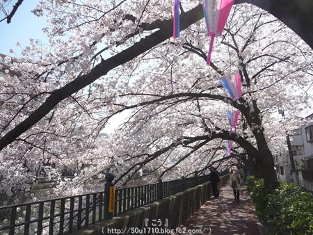 150402-桜 大岡川 (29)
