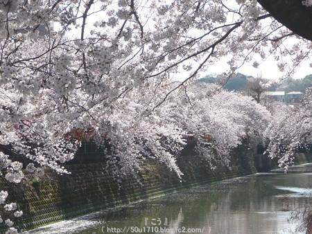 150402-桜 大岡川 (61)