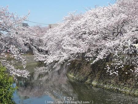 150402-桜 大岡川 (80)