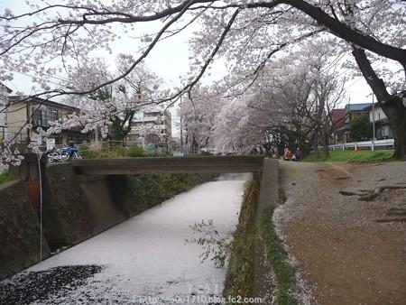150403-桜 大和千本桜 (72)