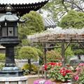 Photos: 藤と牡丹