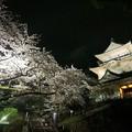 小田原城と夜桜1