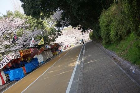 2015年3月30日 西公園 桜 福岡 さくら 写真 (10)
