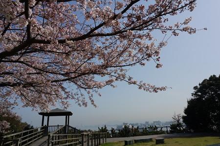 2015年3月30日 西公園 桜 福岡 さくら 写真 (51)