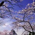桜前線を追いかけて