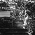 Photos: 散策路