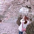 写真: 桜色の君