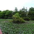 teramachi_041