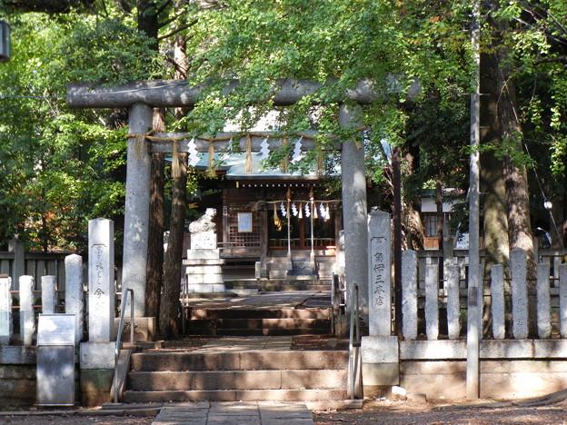 鳥居と拝殿-氷川神社 (目黒区八雲)
