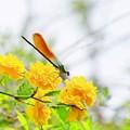 Photos: 花どまり。