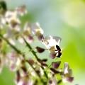 Photos: beesy.