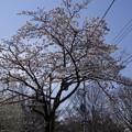 Photos: 水生植物園前