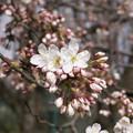 Photos: 野川公園