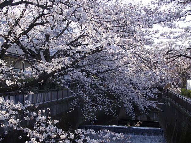Photos: 東宝撮影所(2)