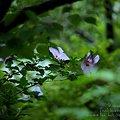 夏を感じる花