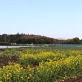 Photos: 春の空
