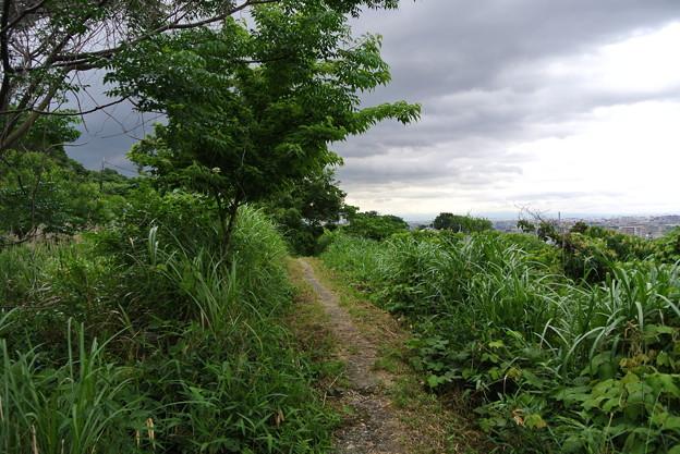 墓参・山沿いの道 (2)