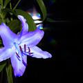 写真: 名前のない花
