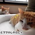 Photos: 犯人はママ?