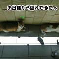 Photos: 日向ぼっこ!?