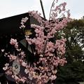 Photos: 東京大神宮04