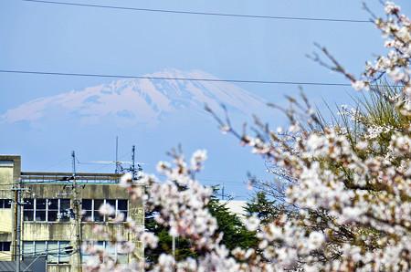 150412桜と鳥海山