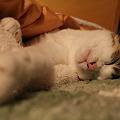 写真: 熟睡中