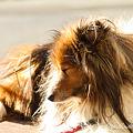 Photos: 愛犬 EOS7D SPAF 28-75 A09