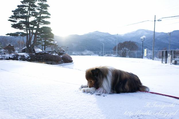 Photos: 愛犬と雪 NEX-5 E16