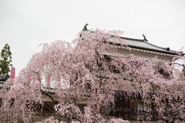 写真: 迎春城