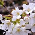 Photos: 春が来ました