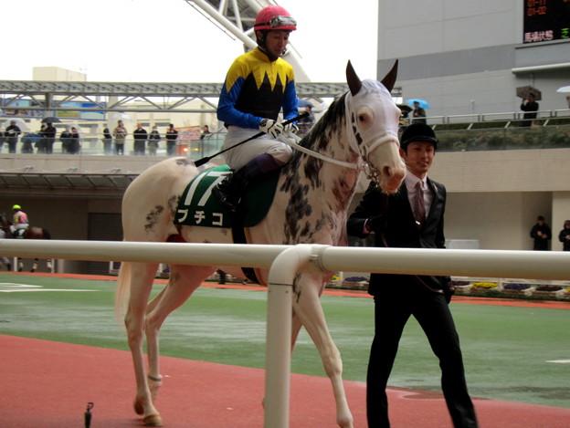 ブチコ & 武豊騎手