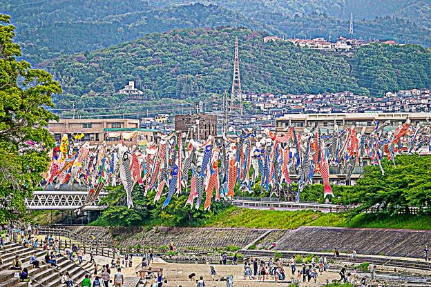 写真: #1 芥川桜堤公園