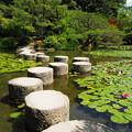 「臥龍橋」,平安神宮神苑 Garyu-kyo stepping stones,Kyoto *睡蓮や鯉の分けゆく花二つ