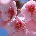 Photos: お花見♪