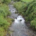 写真: 水清谷川