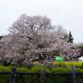 2015/04/11・・・狩宿の下馬桜?01
