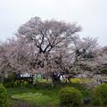 2015/04/11・・・狩宿の下馬桜?02