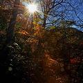 Photos: 三徳山登山中の煌き。。