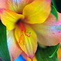 Photos: 華やかに咲く♪