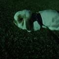 写真: てん 夜散歩 (2)