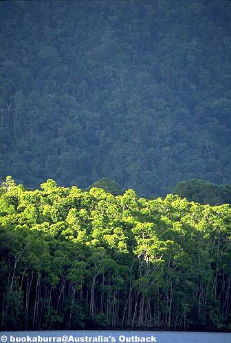 世界遺産の森