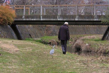 2011.12.23 和泉川 老人とアオサギ