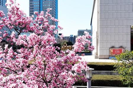 2015.03.25 横浜美術館 モクレンと平和の若い騎手