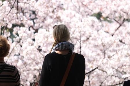 2015.04.02 千鳥ヶ淵 Cherry Blossoms
