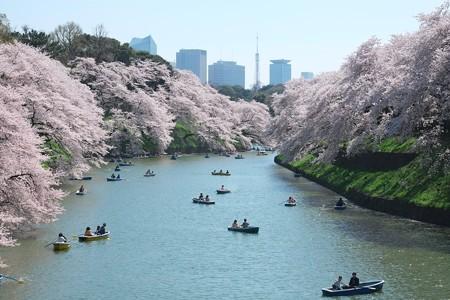 2015.04.02 千鳥ヶ淵 桜浴