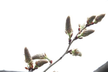 2015.04.04 和泉川 キュウイ